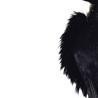 Black Feathers (from Elle se Montre)