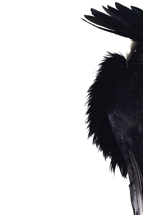 Black Feathers (from the Elle Se Montre series)  by Anna Lewis