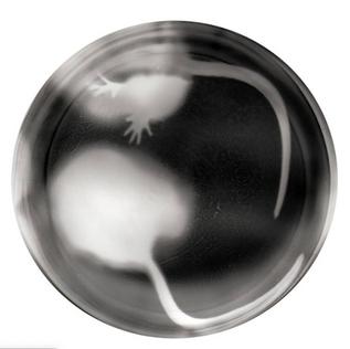 Large Negative Rat Jar #7
