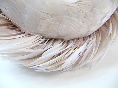 Pink Feathers (from the Stay series)  by Anna Lewis