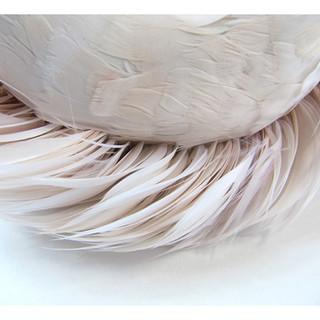 Pink Feathers (from the Stay series)