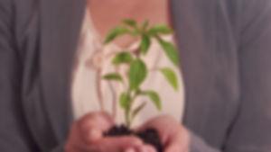 554555679-botanique-plant-intelligence-b