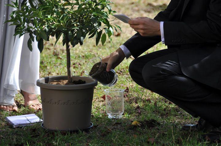 Rituel de l'arbre