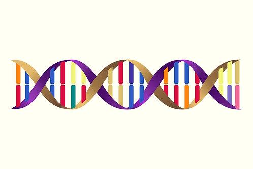 Relationship Colour DNA