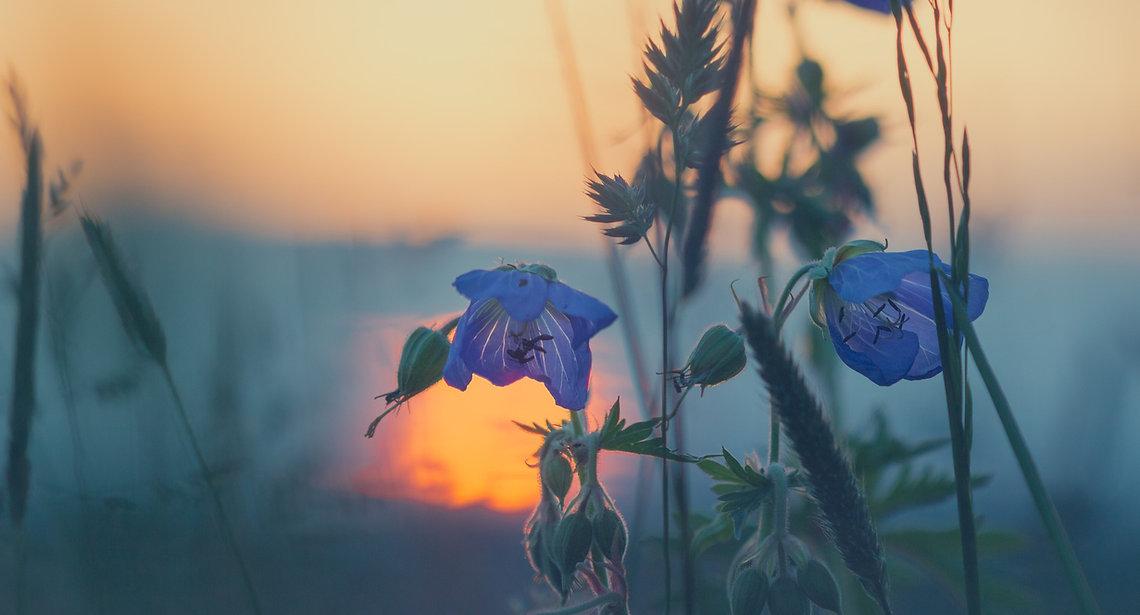 meadow-811339_1920.jpg