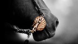 caballo_index3