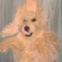 Bailey Dog