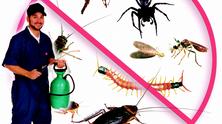 شركة مكافحة حشرات بالمدينة المنورة و طرد الفئران والقوارض
