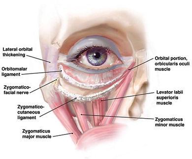 ผ่าตัดถุงใต้ตา ถุงใต้ตา ตัดถุงใต้ตา