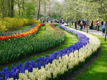 Flower's Holland