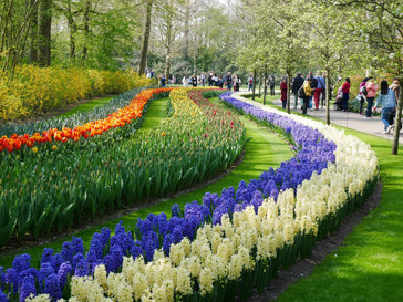 Flower's Holland