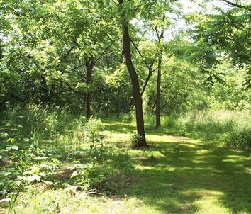 nature preserve 004.jpg