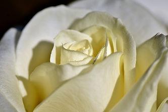 rose-4195204_960_720.jpg
