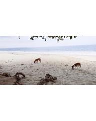 Lumley Beach Dogs