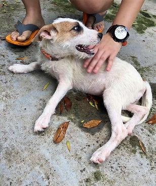 Malaysia Animal Intervention