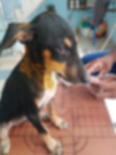India Animal Intervention