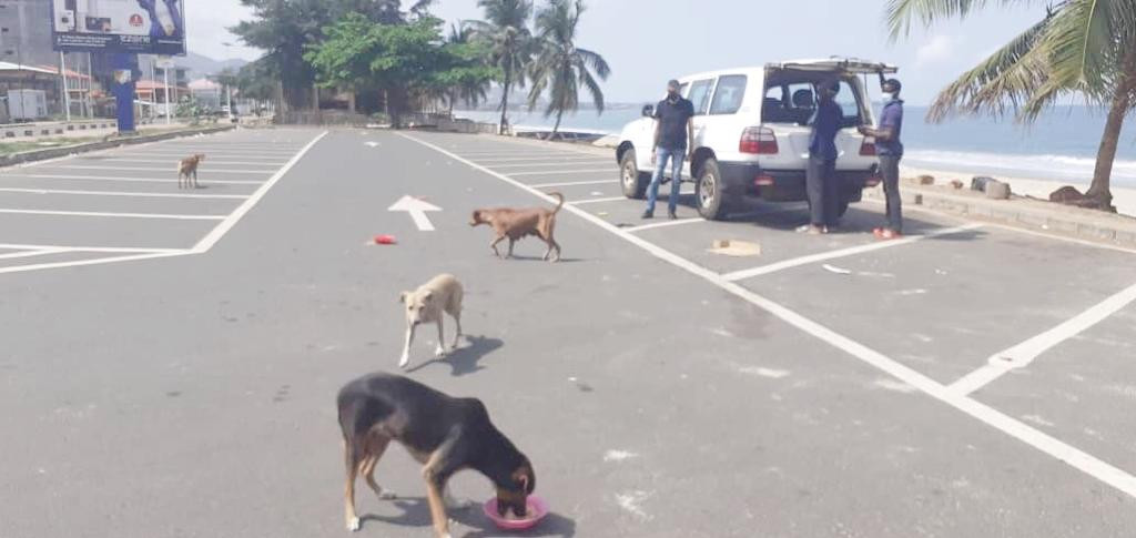 Lumely Beach Dogs