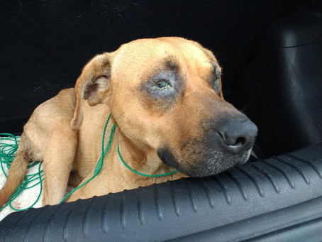Rafaela – left in the street bleeding and with a severe eye infection.