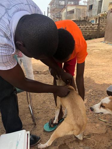 Spurview Rabies Vaccination Program