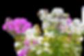 Pix Transp Wild Flowers.webp