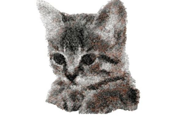 Tawny Kitten Photostitch
