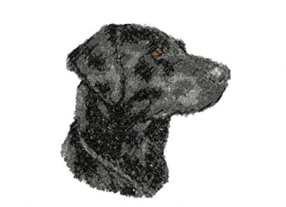 Black Labrador Photostitch