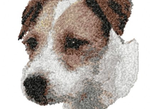 JACK RUSSELL ROUGH COAT 2
