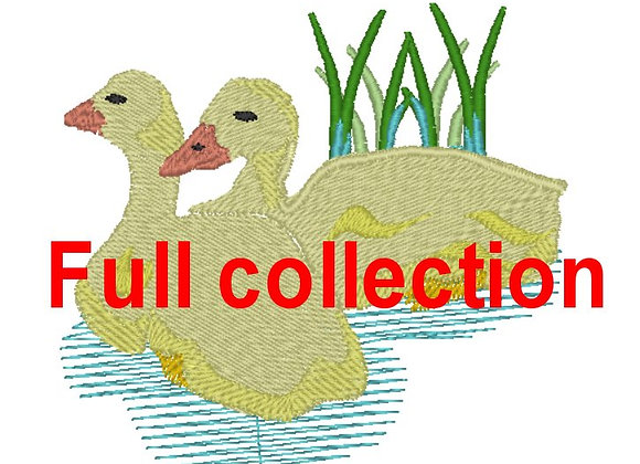 All Duck Designs for £6.00