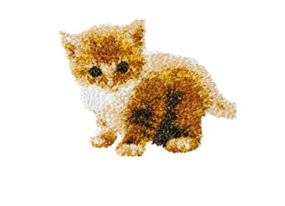 Kitten Marmalade (whole body)