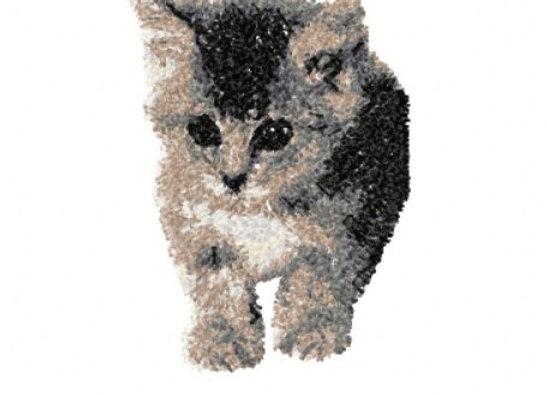 Kitten Photostitch