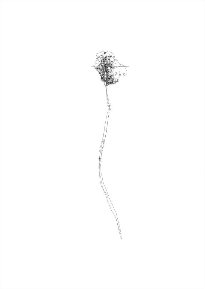 Flower 4, 2012