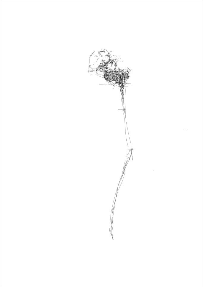 Flower 1, 2012