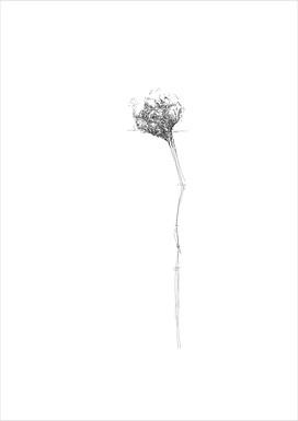 Flower 5, 2012