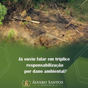 Já ouviu falar em tríplice responsabilização por dano ambiental?