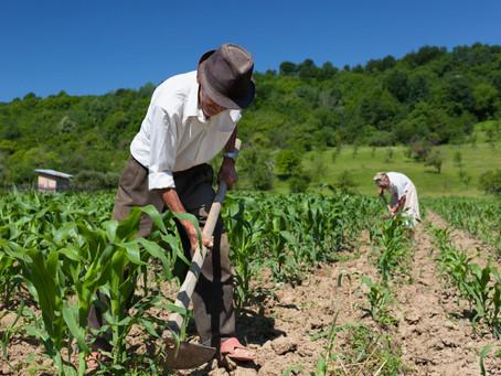 Reforma trabalhista no campo