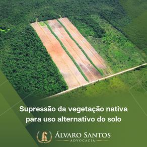 O que você precisa saber sobre supressão da vegetação nativa para uso alternativo do solo?