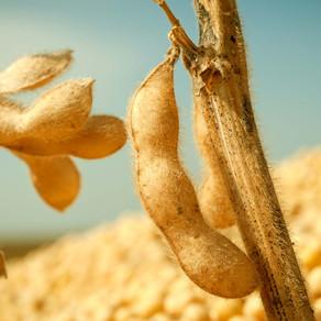 Derrubado o Decreto que cobrava 0,2 % sobre a soja