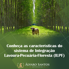 Conheça as características do sistema de Integração Lavoura-Pecuária-Floresta (ILPF)