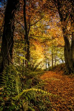 Autumn17_009