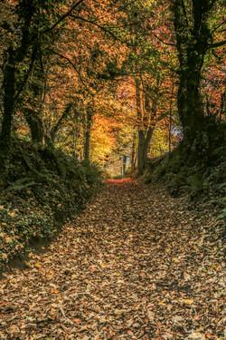 Autumn17_007