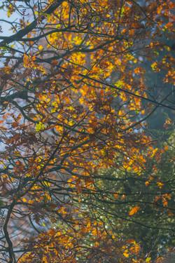 Autumn_D0I1545November 17, 2017