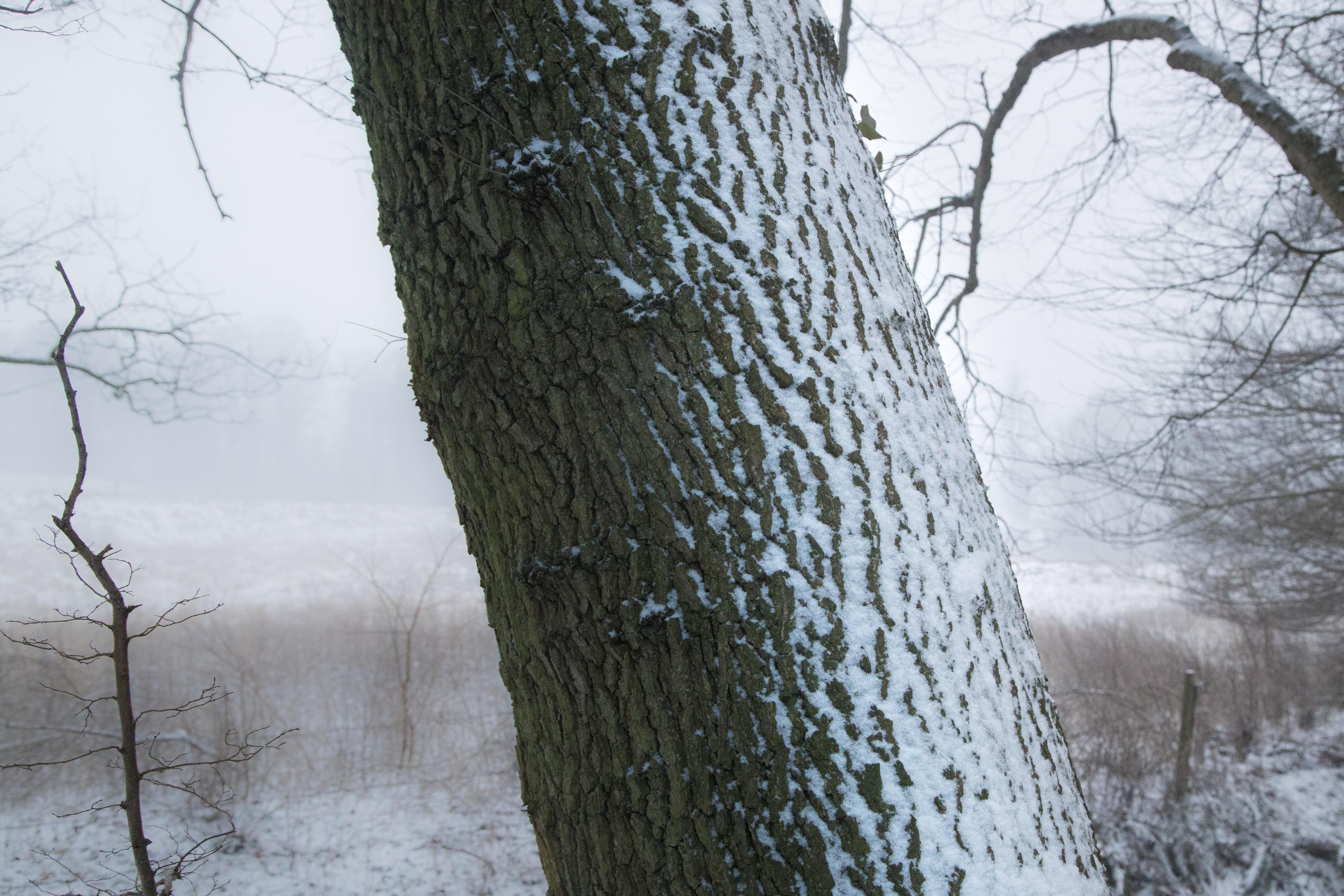 Elemental Blog (21 of 21)