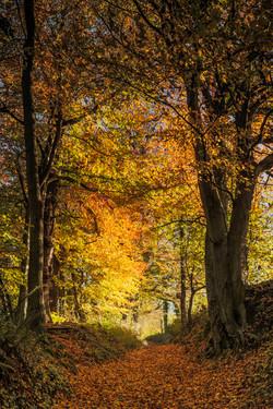 Autumn17_008