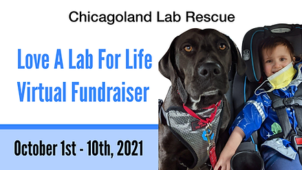 2021 CLR love a lab banner 2021.png