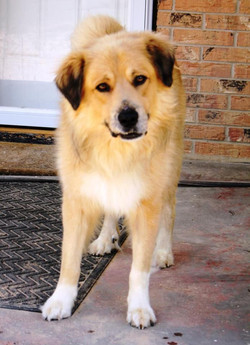 Griffin - foster or adopter needed