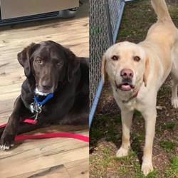 Riley & Tucker - adopting