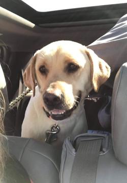 Gracie - adoption pending