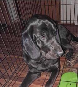 Bella - adoption pending