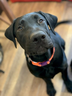Onyx - adoption pending