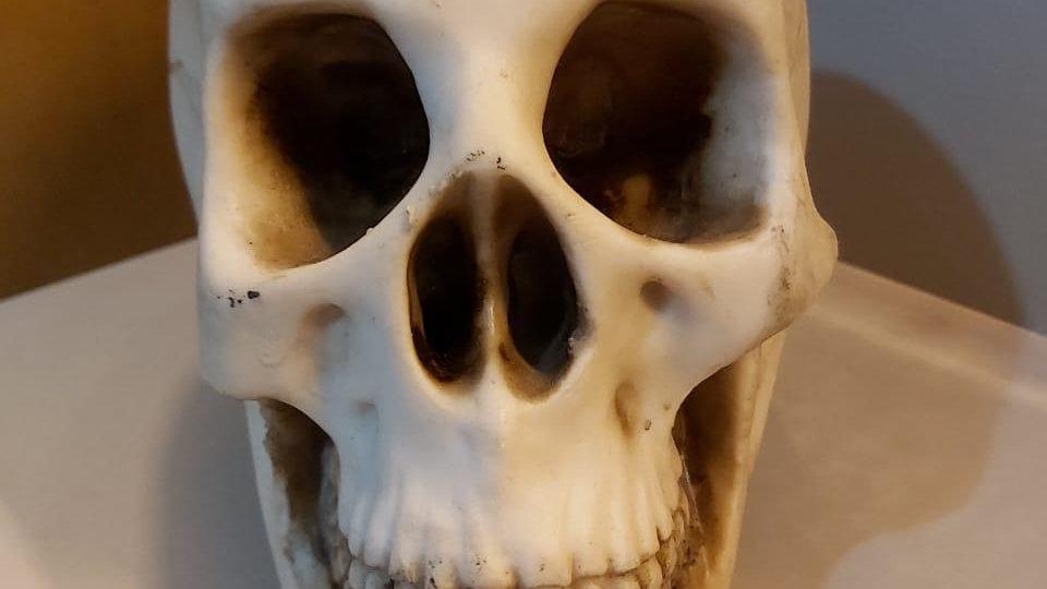 Crânio grande